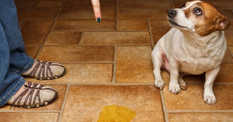 10 problemas de comportamento dos cachorros. Saiba como resolver!