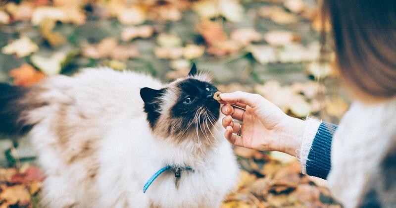 Cuidando da dieta do seu gatinho! Veja 8 dicas importantes