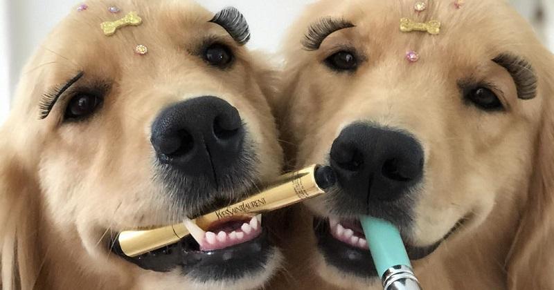 10 cachorras mais vaidosas do que você