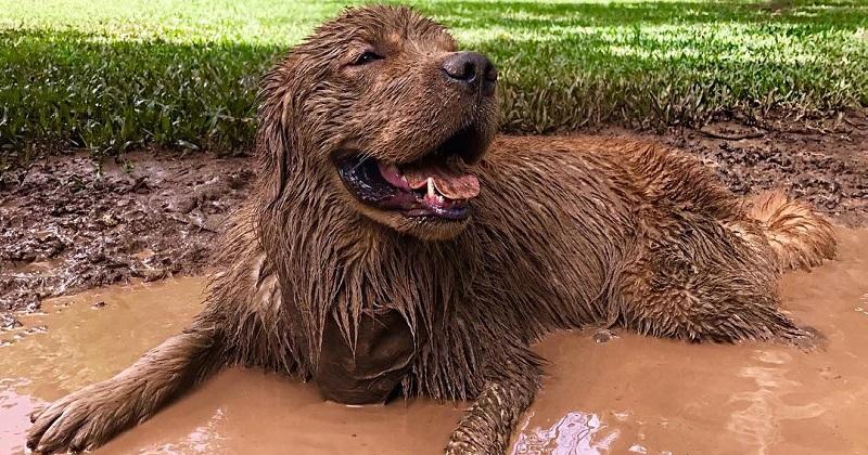 5 motivos para NÃO ficar bravo quando seu cachorro ficar sujo