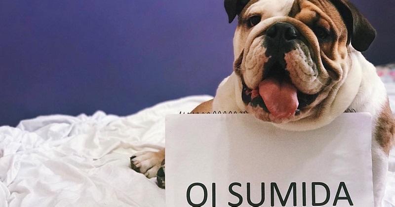 11 cachorros que superaram a plaquinha da vergonha