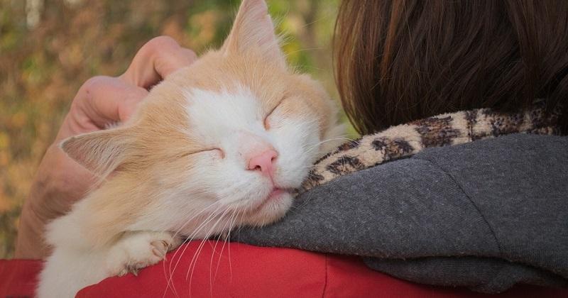 8 motivos que fazem o gato ronronar