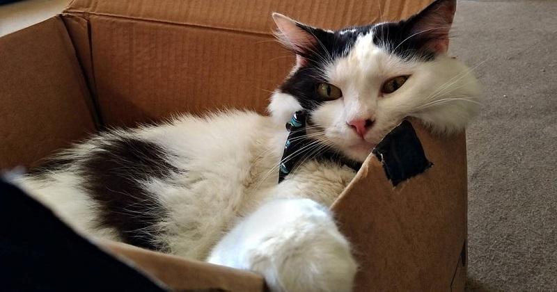 3 motivos dos gatos amarem MUITO CAIXAS