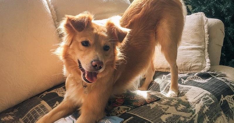 Você tem TOC Transtorno Obsessivo por Cachorro? | QUIZ
