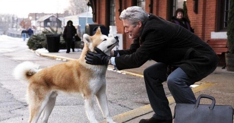 12 Melhores Filmes para Apaixonados por Cachorros