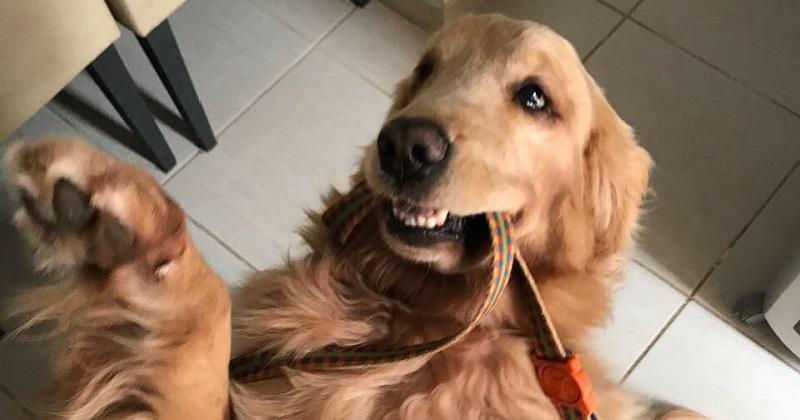 10 carinhas cachorros de pidões mais irresistíveis