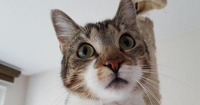 5 Motivos Para Seu Gato Fazer Xixi Fora da Caixa