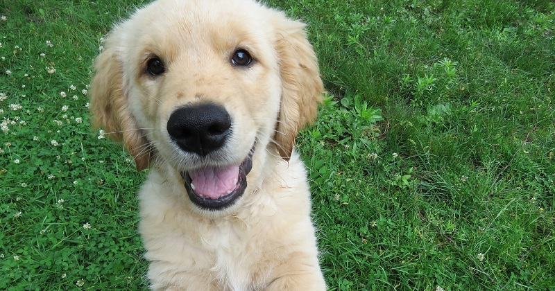 Saiba como fazer seu cachorro feliz em 2 minutos