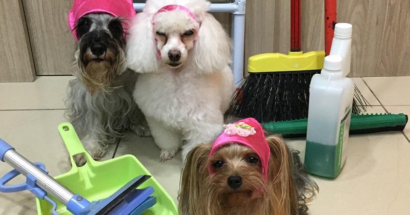 3 dicas práticas para limpar a casa de quem tem cachorro