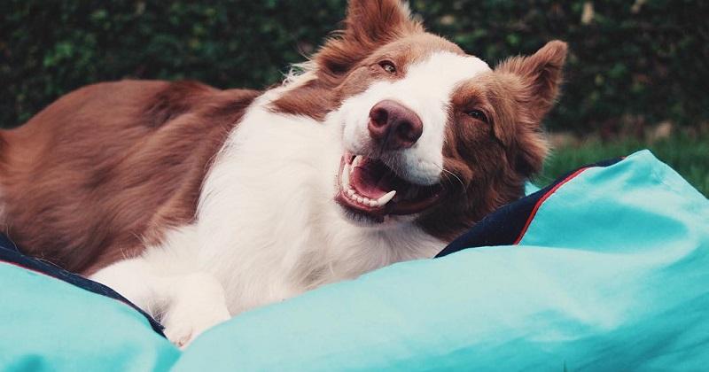 10 motivos pelos quais amamos tanto o nosso cachorro