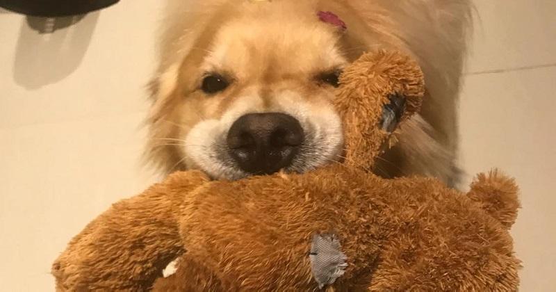 12 cachorros que não desgrudam do brinquedo favorito