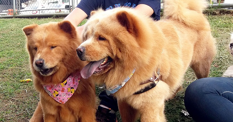 7 dicas de como fazer uma festa para cachorro