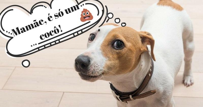 Coprofagia. Por que meu cachorro come cocô?