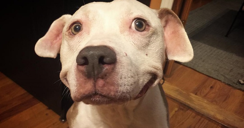 10 fotos do cachorro com sorriso mais lindo do mundo