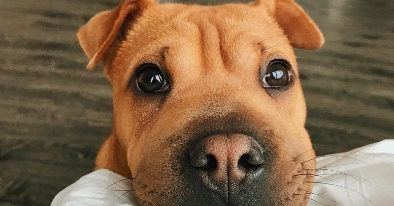 12 passos para identificar um cachorro fofo