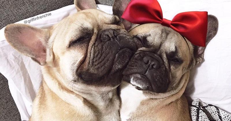 12 cachorros que não vão passar o Dia dos Namorados sozinhos