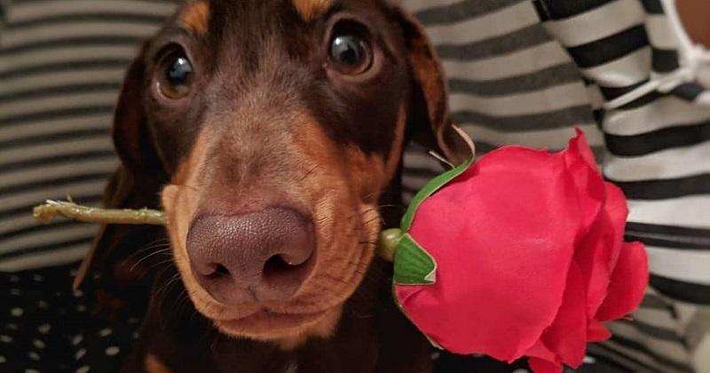7 Salsichinhas mais fofos do que seu namorado