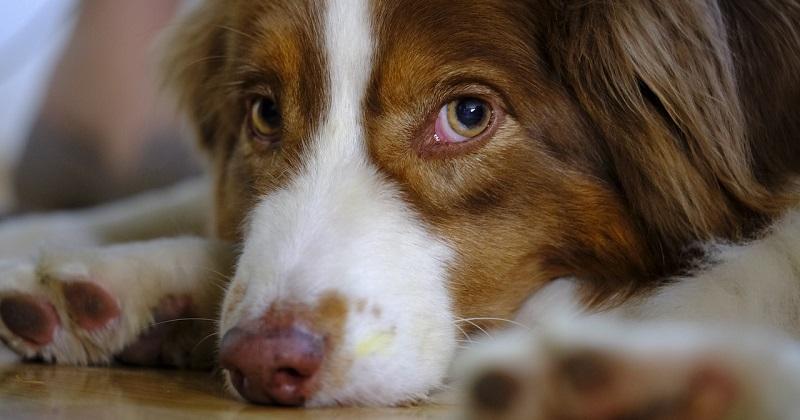 Seu cachorro fica muito tempo sozinho? Saiba o que fazer