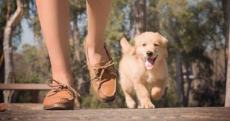 Saiba os verdadeiros benefícios em caminhar com seu cachorro