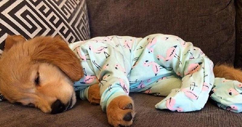 10 cachorros de pijama e prontos para dormir
