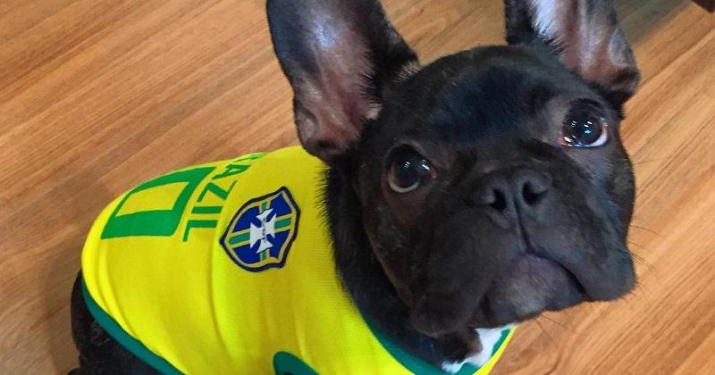 12 cachorros prontos para assistir a Copa