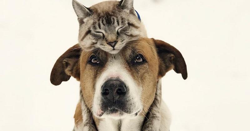 Confirmado! Cão e gato podem ser grandes amigos