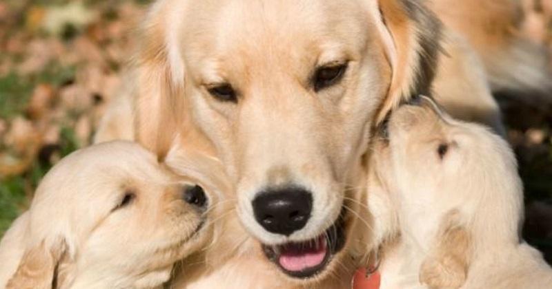 10 dúvidas sobre vacinas para pets