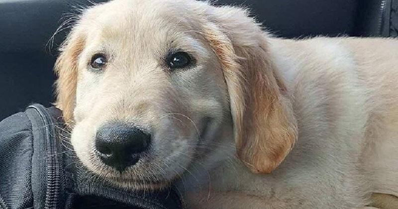 10 sorrisos de cachorros mais lindos