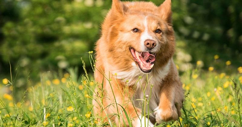 Cachorro fugindo durante o passeio? Saiba como evitar