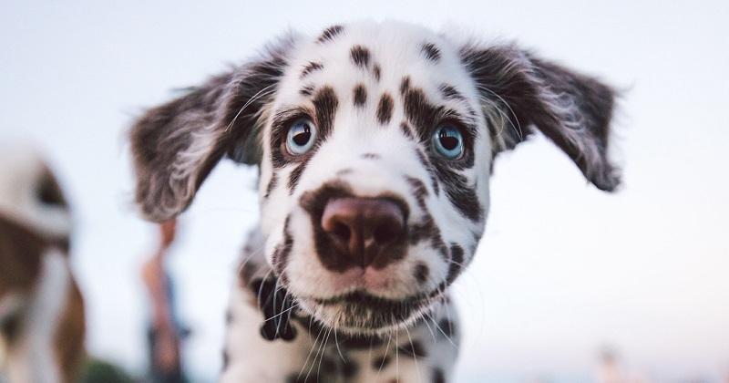14 fotos mais incríveis de cachorro