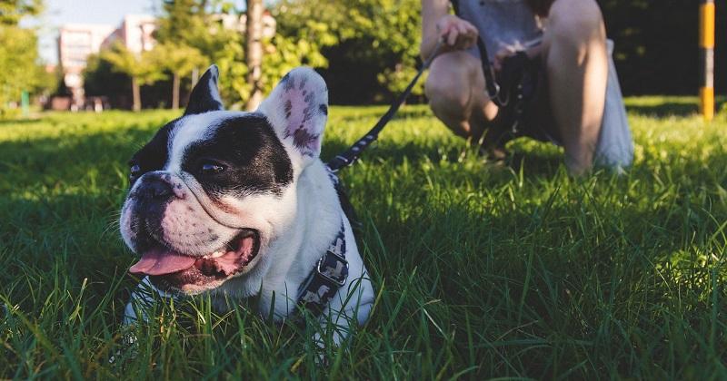 7 dicas para escolher a melhor coleira para o seu cachorro