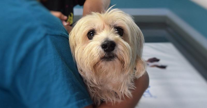Pets podem doar sangue