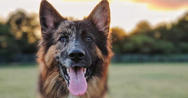 8 imagens de um cachorro com pelagem incrível