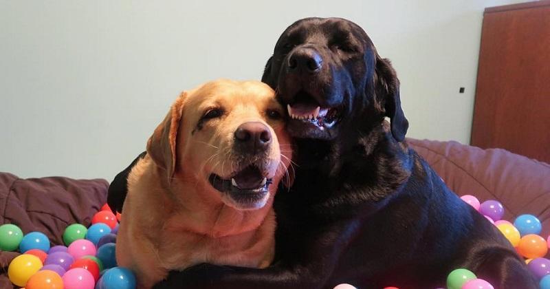 10 imagens provam que a amizade canina é a melhor