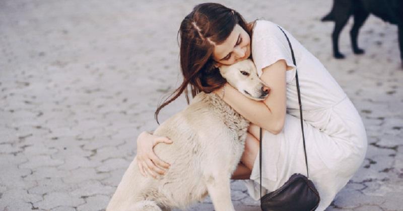 Pets podem ter guarda compartilhada em processo de separação