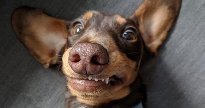 10 sorrisos mais encantadores de cachorro