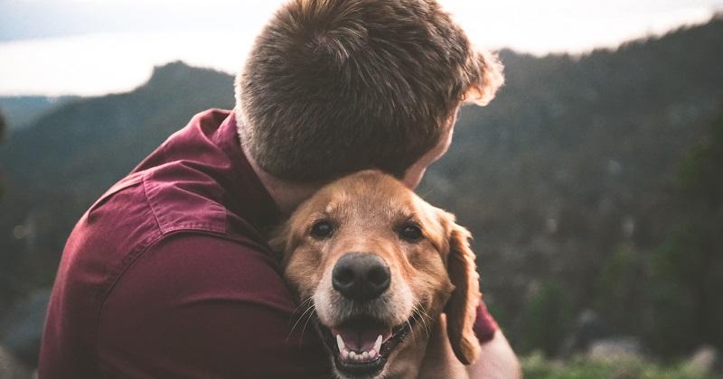 Como lembrar do seu pet de maneira criativa
