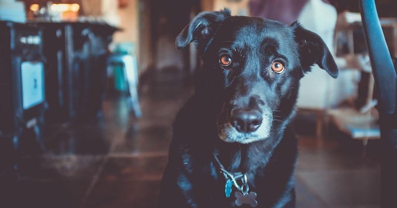 3 coisas que seu cachorro pediria para você se ele soubesse falar