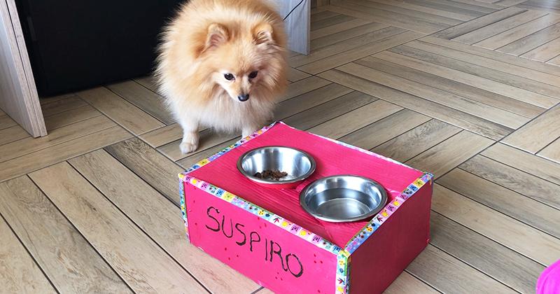 DIY: Como fazer um Comedouro Suspenso de Papelão com o BOX.Petiko