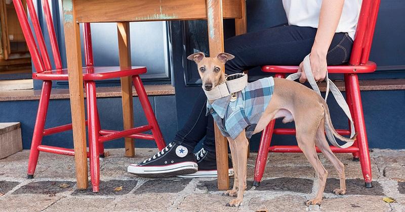 Roupa de cachorro: elas salvam seu cão no frio, ou isso é conversa fiada?