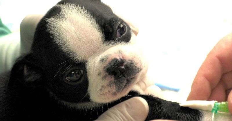 Guia Completo Sobre Vacina Nacional e Importada para o Pet