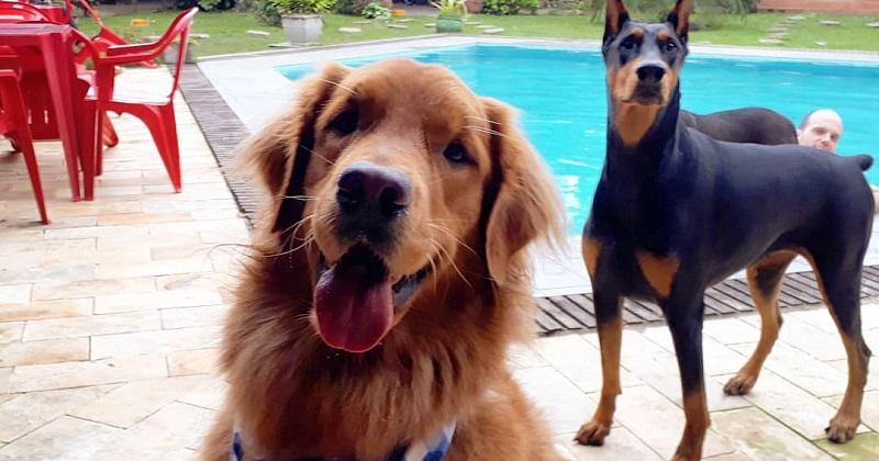 Como escolher um hotel Pet Friendly