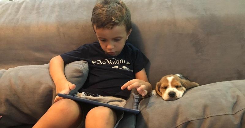 As Semelhanças Entre um Beagle e uma Criança