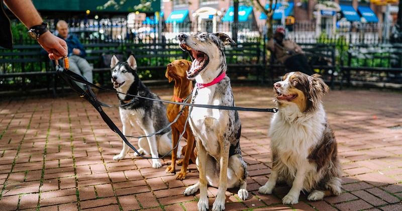Cuidados ao Escolher um Pet-sitter ou Dog Walker
