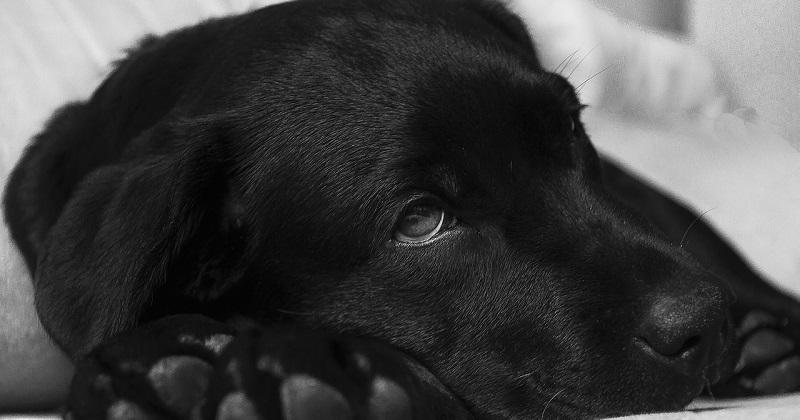 Problemas Para os Quais a Acupuntura Veterinária é Indicada ao seu Cão