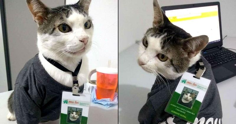 Você Viu? Gato Ganha Crachá de Gerente e Uniforme