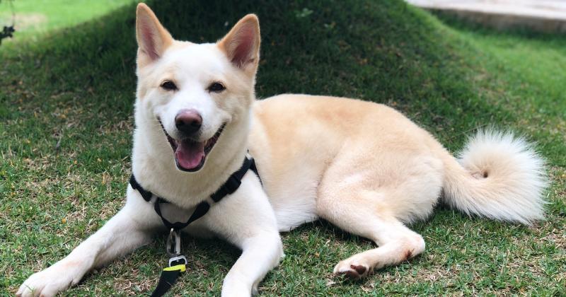 Benefícios em Passear com Cachorro