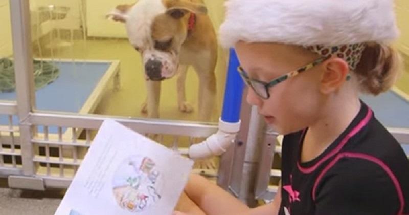 Crianças Leem para Cachorros Vítimas de Maus Tratos