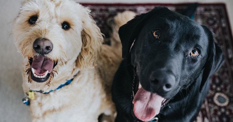 Saiba as Vantagens e Desvantagens de um Pet Sitter e do Hotelzinho