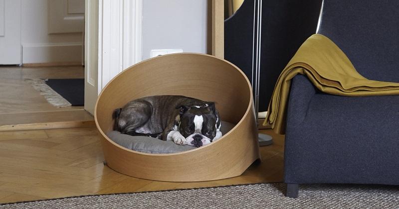 6 Camas para Cachorro que Farão Você Mudar Seu Nível de Exigência
